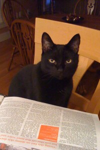 Black cat reading newspaper